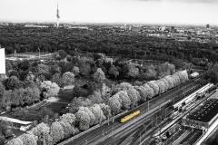 Gelber-Zug